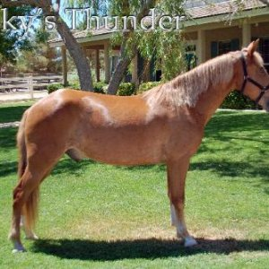 I'm getting these TENNESSEE WALKER horses from http://www.dreamwalkerhorses.com/