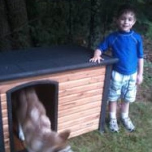 new dog house
