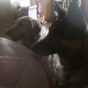 jojo and Brandy begging for food.