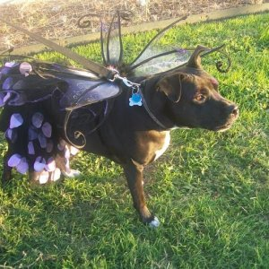 Kitty as a flower petal dog fairy halloween 2011. She loved the attention.