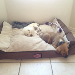 They love this bed.