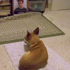 Molly dog looks at my sons photo for hours waiting for him to come home!