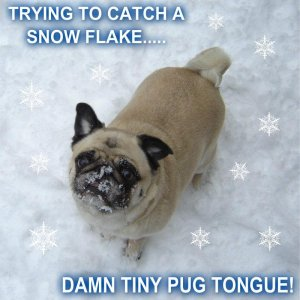 Pug Catching A Snow Flake