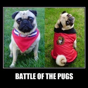 Battle of the Pugs