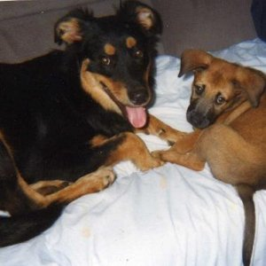 Ingrid and Ginger Adopted 1999 from the rescue.
