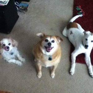 Chance(middle), Jasmine(right), and their cousin, Sophie.